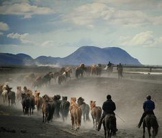 Iceland - Riders driving the Icelandic horse herds to the inland fields for the spring and summer by Sverrir Thorolfsson, via Flickr