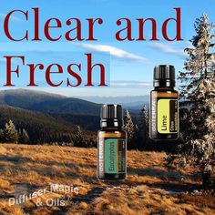 Inspired by essential oil enthusiast and Diffuser Magic fan Helena Bruwer .... Seriously try this in your diffuser during the day or when you need some uplifting benefits of the citrus oils and the clearing benefits of the eucalyptus
