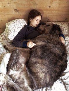 Irish wolf hound <3