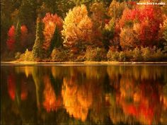 Fall's colors trees by a lake