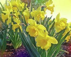 Eileen Blair - Springtime