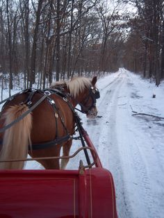Horse Drawn Sleigh Ride in the Snow