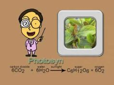 Photosynthesis song for science. My son learned it in K and he still remembers this process week 12 Science Week, 5th Grade Science, Science Videos, Science Resources, Elementary Science, Middle School Science, Science Lessons, Science Activities, Life Science