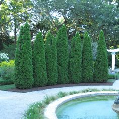 Thuja Emerald Arborvitae Landscaping, Privacy Landscaping, Backyard Privacy, Outdoor Landscaping, Landscaping Ideas, Shrubs For Privacy, Privacy Trees, Privacy Hedge, Emerald Arborvitae