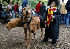 "Harry Potter + ""Fluffy"" the 3-headed dog"