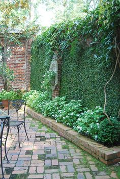 I need this type of climbing vine to cover the crack in my brick wall! In the Studio: In the Garden-heat ma'am!