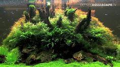 Beautiful stem plants