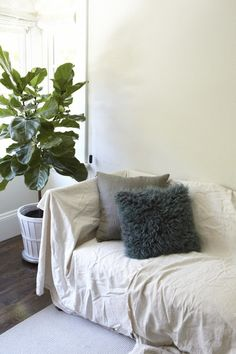 Current Obsessions: Fiddle Leaf Fig Trees