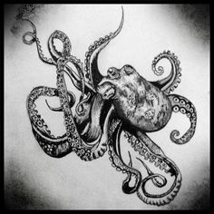 Gallery For > Octopus Pencil Drawings