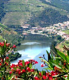 Douro   #dourovalley  #Portwine vineyards #Portugal
