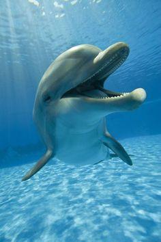 A happy dolphin .