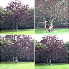 """Weekly Photo Challenge: SYMBOL - TREES  """"A man doesn't plant a tree for himself. He plants it for posterity."""" Alexander Smith  
