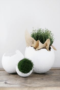 Lovely Egg Decorations   DIY this outstanding decoration craft by planting moss, grass or flowers in these crafty eggs.