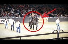 WATCH: This Horse Stands In Formation With Cowboys. When The Music Starts, The Crowd Roars
