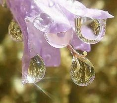 Purple flower with diamond raindrops Dew Drops, Rain Drops, Water Flowers, Purple Flowers, Spring Flowers, Just Amazing, Amazing Nature, Awesome, Image Zen