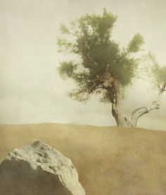 Lin shun-shiung art - Поиск в Google