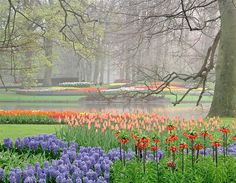 Campos de flores do Keukenhof, na Holanda (© Getty Images)