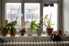 cute flowerpots -Krzysztof Candrowicz — Freunde von Freunden