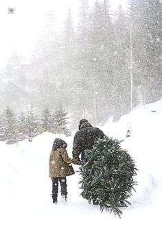 Picking out the tree.