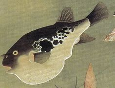 Detail. Fish. Jakuchu Ito.