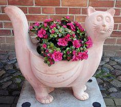 Flower Cat - http://dailyfunnypets.com/pictures/cats-pics/flower-cat/ - Flower Cat  Image by Gertrud K. Greetings to all the cat fans!  Gesehen im Holländischen Viertel in Potsdam. - flower