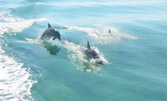 10 things to do in Sanibel and Captiva Islands
