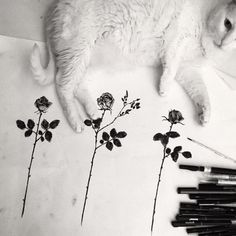 CAROLINE VITELLI - But he that dares not grasp the thorn Should never crave the rose. #blackbotanists #cats #carolinevitelli #annebronte (à Rue Caroline)