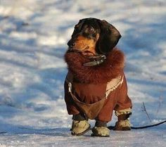 This little guy is ready for winter!! SO cute!