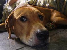 Cachorro Teodor do canil Dogs 101