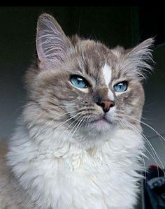 Levi, 1 jaar Cats, Animals, Gatos, Animales, Animaux, Animal, Cat, Animais, Kitty