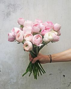 """Polubienia: 2,708, komentarze: 31 – KWIACIARNIA KWIATY&MIUT (@kwiatyimiut) na Instagramie: """"#kwiatyimiut #kwiatysapiekne #jaskry"""""""