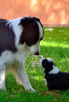 The Cutest Parenting Moments In The Animal Kingdom 10