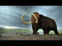 5 Tiere - die in 10 Jahren ausgestorben sind.. - YouTube
