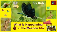 For Kids: What is Happening in the Meadow -Ep.2 Hares, Snail, Butterfly,...