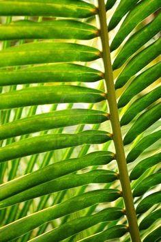Palmtree,green,texture