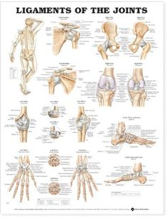 Ligaments of the Joints Anatomical Chart by Anatomical Chart Company http://www.amazon.com/dp/1587794667/ref=cm_sw_r_pi_dp_gGQAub1NJ928G