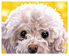 WHITE POODLE Art Print Signed by Watercolor Artist by k9artgallery