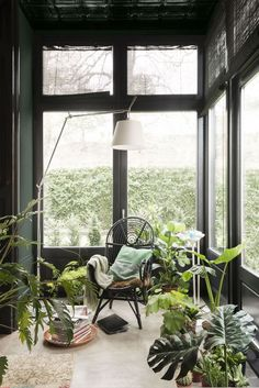 Tall windows with window frames and wall painted dark green | lush green plants