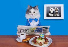 Cat's dinner