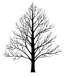 Best Types of Hardwood Trees to Use for Firewood: Oak, Cherry, Sassafras, Locust, and Ash Silhouette Wood Burning Stencils, Wood Burning Patterns, Wood Burning Art, Tree Patterns, Wood Patterns, White Ash Tree, Types Of Christmas Trees, Family Tree Art, Bare Tree