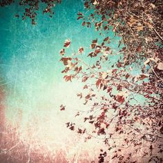 Autumn Photography, blue turquoise, grunge rustic, colourful, home decor, sky, leafs leaves, pink red, vintage, surreal 8x8. $25,00, via Etsy. Autumn Photography, Fine Art Photography, Grunge, Bicycle Art, Fall Jewelry, Warm Colors, House Colors, Fine Art Prints, Canvas Art