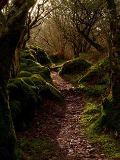 Argyll woods trail, Scotland