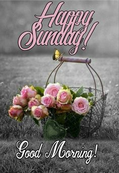 Good Sunday Morning, Good Morning Greetings, Happy Sunday, Good Morning Beautiful Images, Days Of Week, Birthday Wishes, Shark Fin, Mornings, Blessings