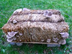Mushroom garden kit can be used to grow mushrooms on something as simple as a bale of straw.