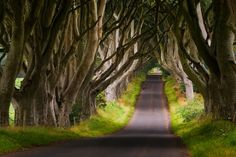 The Dark Hedges, Ireland - I've officially added this to our road trip this summer!