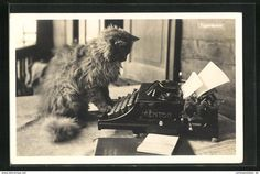 You are looking for a rare collectable item? Stamps, coins and banknotes, postcards or any other collectable items are on Delcampe! Crazy Cat Lady, Crazy Cats, Pansies, Adorable Animals, Auction, Photography, Life, Ideas, Decor