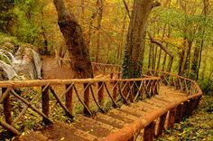 Forest Stairs, Monasterio de Piedra, Spain  I LOVE Spain. I could go back. I never saw this. Probably the most beautiful place I've ever been.