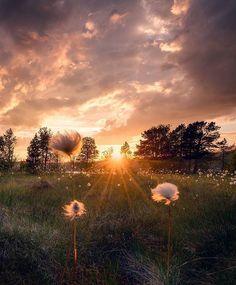 @vloggercamera #beautiful #morning #relax #relaxing #refreshing #nature #sky #grass  #rural #fall #bright #field #summer #dusk #tree #fog