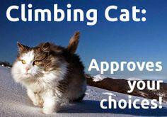 Great Mountain Cat Climb
