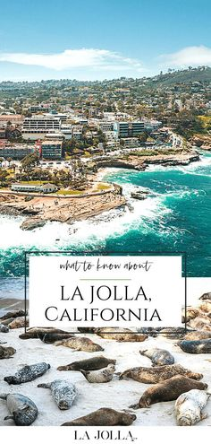 500 Best La Jolla Images In 2020 La Jolla San Diego Travel La Jolla California
